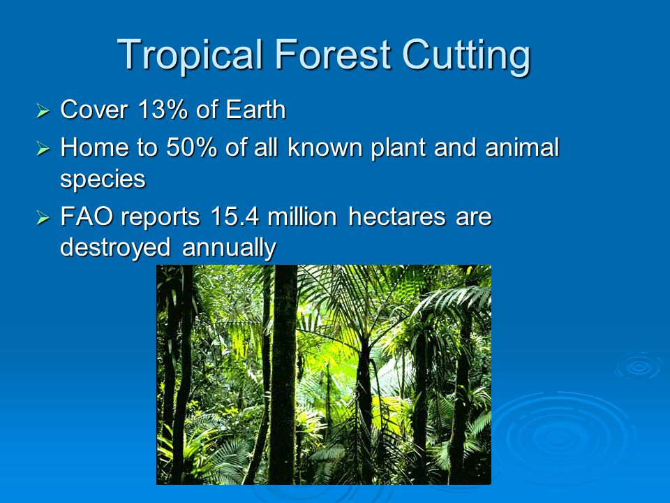 Tropical Forest Cutting  Cover 13% of Earth  Home to 50% of all known plant and animal species  FAO reports 15.4 million hectares are destroyed annually