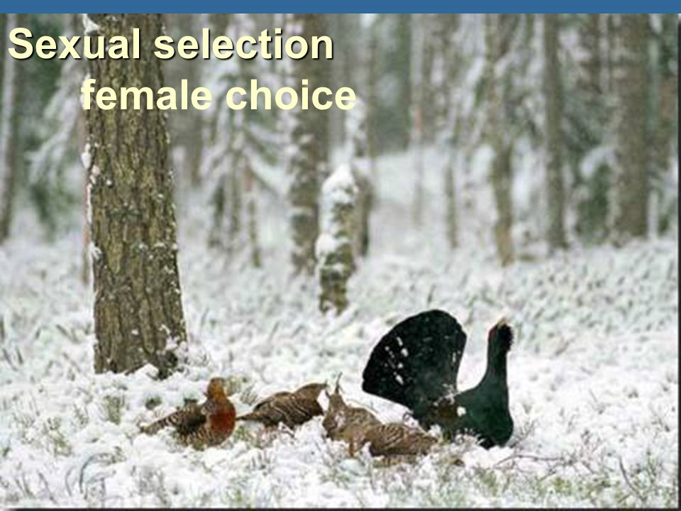 female choice Sexual selection