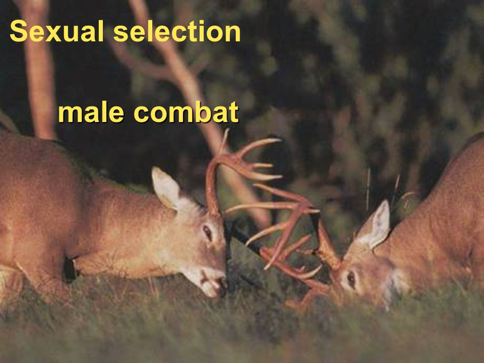 female choice Sexual selection male combat Sexual selection