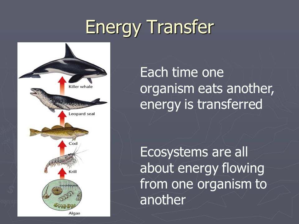 Energy Transfer Each time one organism eats another, energy is transferred Ecosystems are all about energy flowing from one organism to another