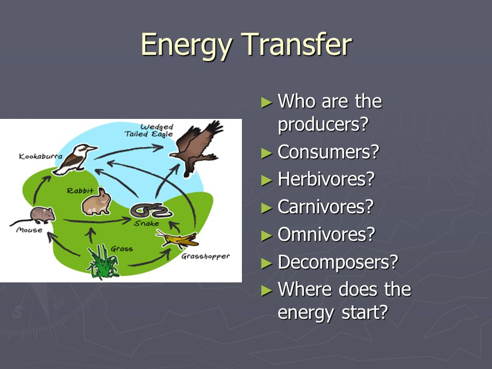 Energy Transfer ► Who are the producers? ► Consumers? ► Herbivores? ► Carnivores? ► Omnivores? ► Decomposers? ► Where does the energy start?