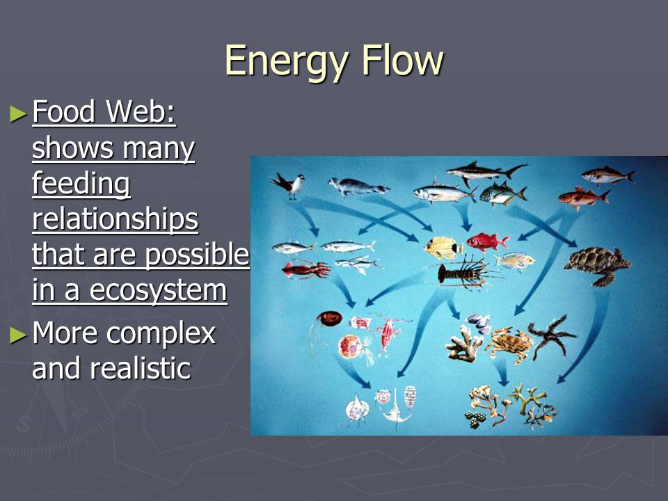 Energy Flow ► Food Web: shows many feeding relationships that are possible in a ecosystem ► More complex and realistic
