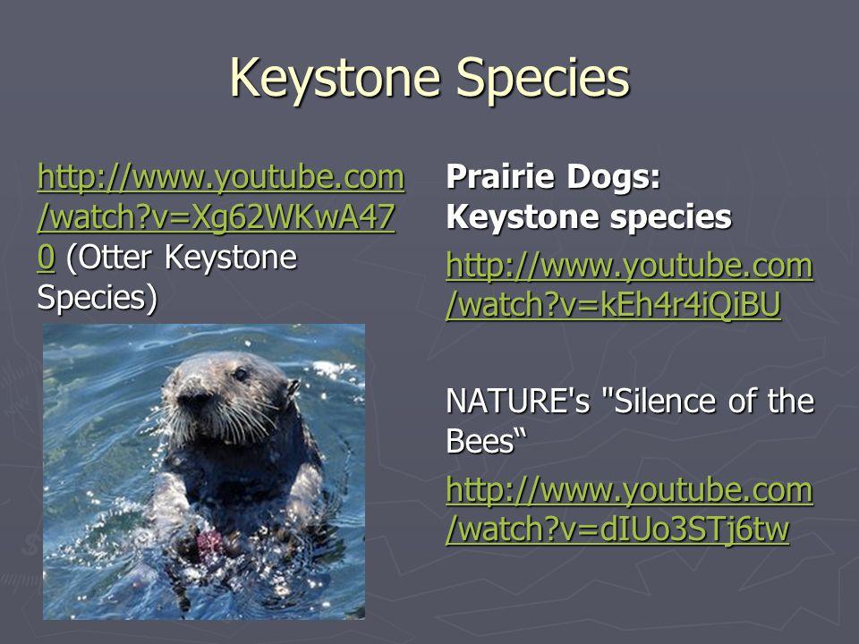 Keystone Species http://www.youtube.com /watch?v=Xg62WKwA47 0http://www.youtube.com /watch?v=Xg62WKwA47 0 (Otter Keystone Species) http://www.youtube.