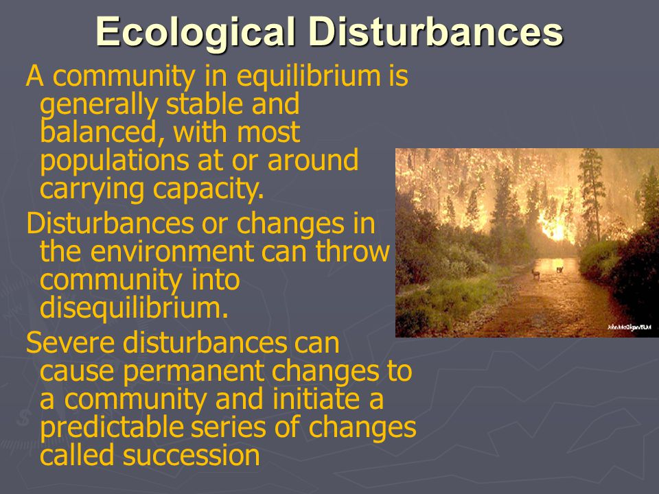 Ecological Disturbances A community in equilibrium is generally stable and balanced, with most populations at or around carrying capacity. Disturbance