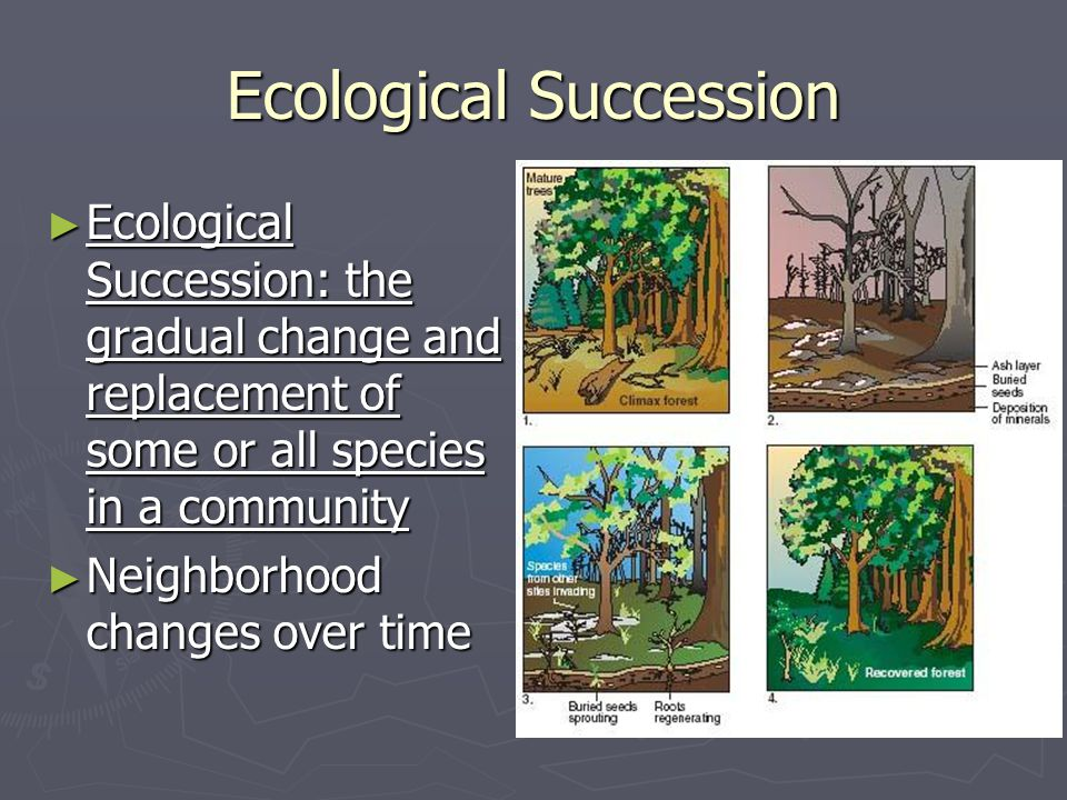 Ecological Succession ► Ecological Succession: the gradual change and replacement of some or all species in a community ► Neighborhood changes over ti