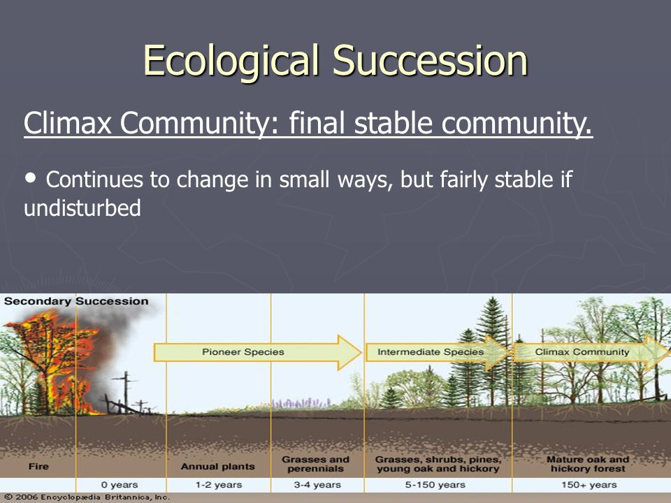 Ecological Succession Climax Community: final stable community. Continues to change in small ways, but fairly stable if undisturbed