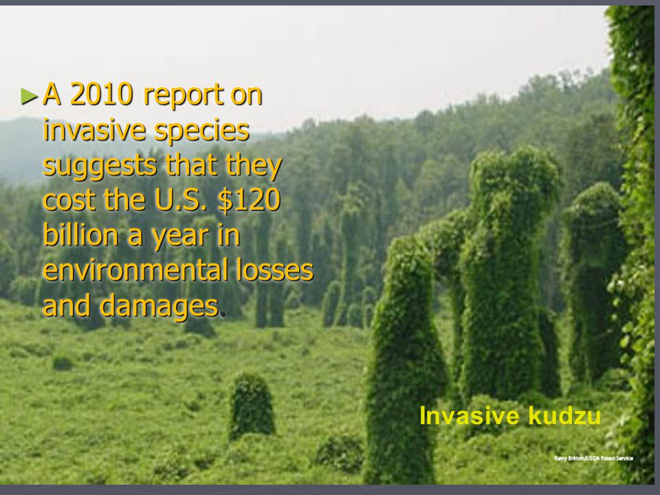 Invasive kudzu ► A 2010 report on invasive species suggests that they cost the U.S. $120 billion a year in environmental losses and damages.