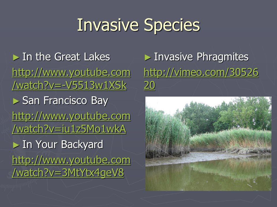 Invasive Species ► In the Great Lakes http://www.youtube.com /watch?v=-V5513w1XSk http://www.youtube.com /watch?v=-V5513w1XSk ► San Francisco Bay http