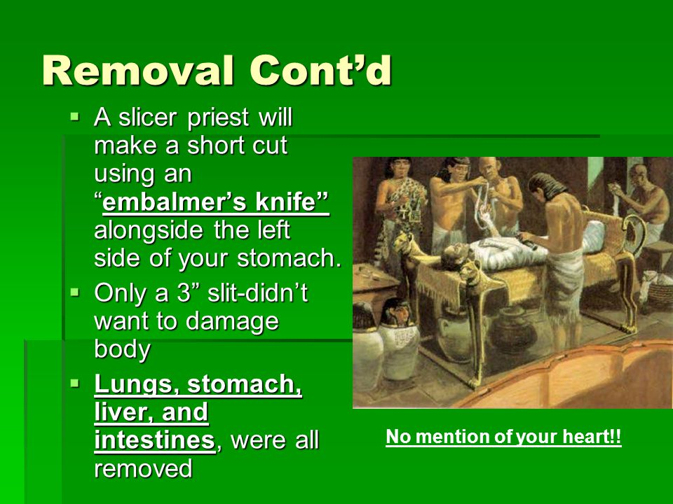 Removal Cont'd  A slicer priest will make a short cut using an embalmer's knife alongside the left side of your stomach.