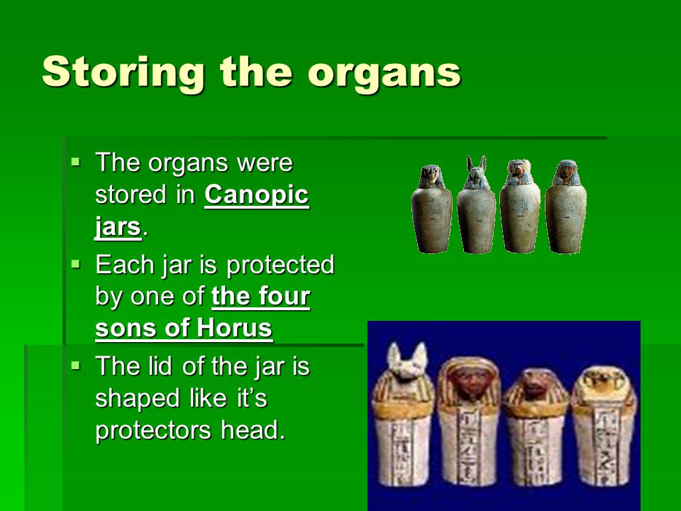 Storing the organs  The organs were stored in Canopic jars.