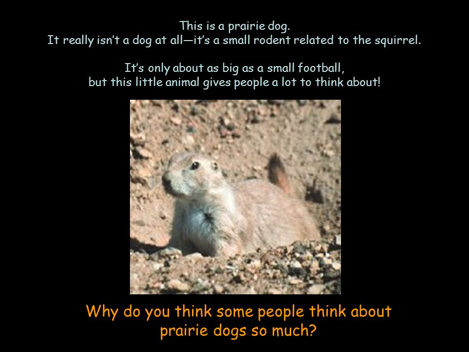 Part of the reason is that prairie dogs used to live in many different grassy places across the United States.