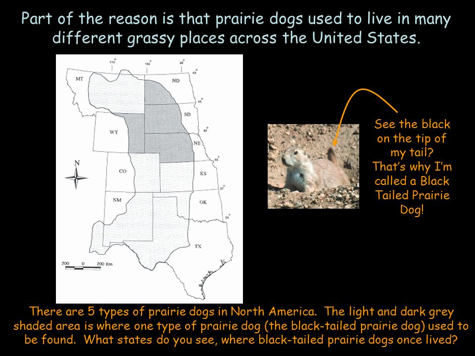 Prairie dogs do lots of important things for other animals.