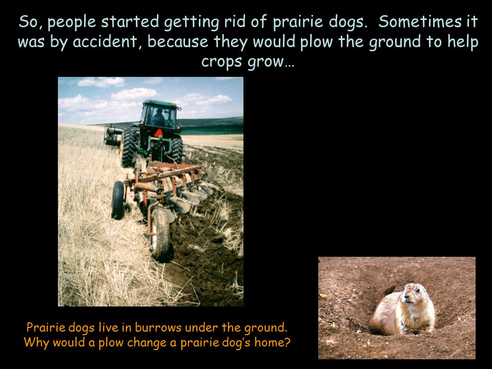 So, people started getting rid of prairie dogs.