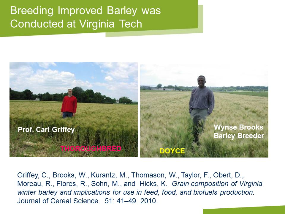 Apply name/department/presentation title in header and footer THOROUGHBRED DOYCE Breeding Improved Barley was Conducted at Virginia Tech Prof.