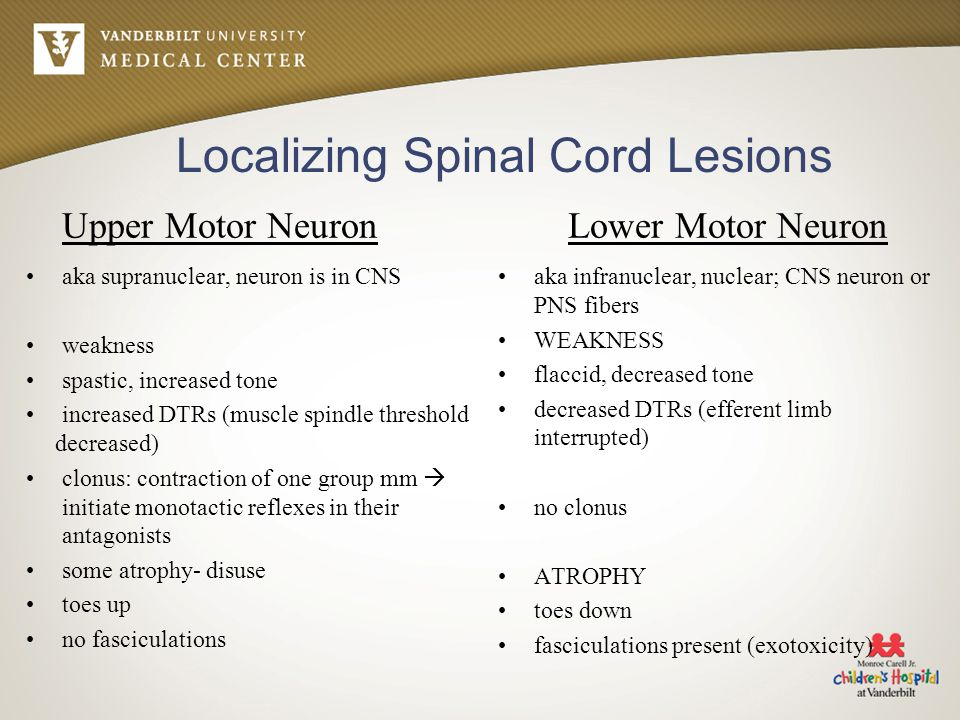 Localizing Spinal Cord Lesions Upper Motor Neuron aka supranuclear, neuron is in CNS weakness spastic, increased tone increased DTRs (muscle spindle t