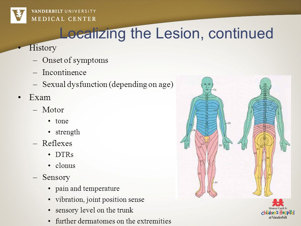 Localizing the Lesion, continued History –Onset of symptoms –Incontinence –Sexual dysfunction (depending on age) Exam –Motor tone strength –Reflexes D