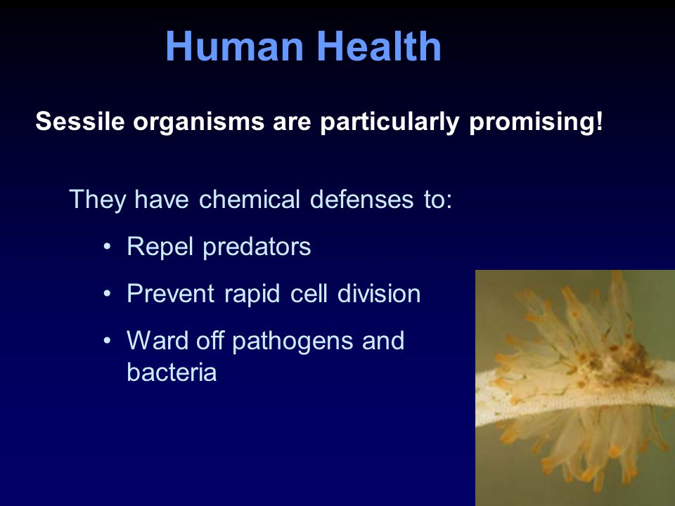 Human Health Sessile organisms are particularly promising.
