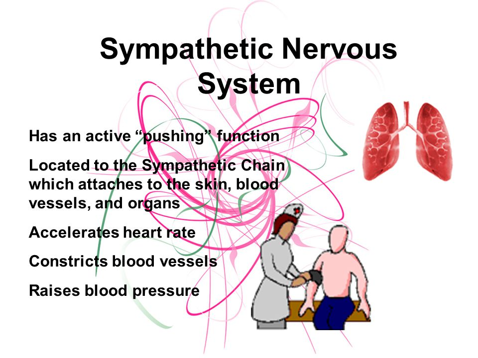 Sympathetic Nervous System Has an active pushing function Located to the Sympathetic Chain which attaches to the skin, blood vessels, and organs Accelerates heart rate Constricts blood vessels Raises blood pressure