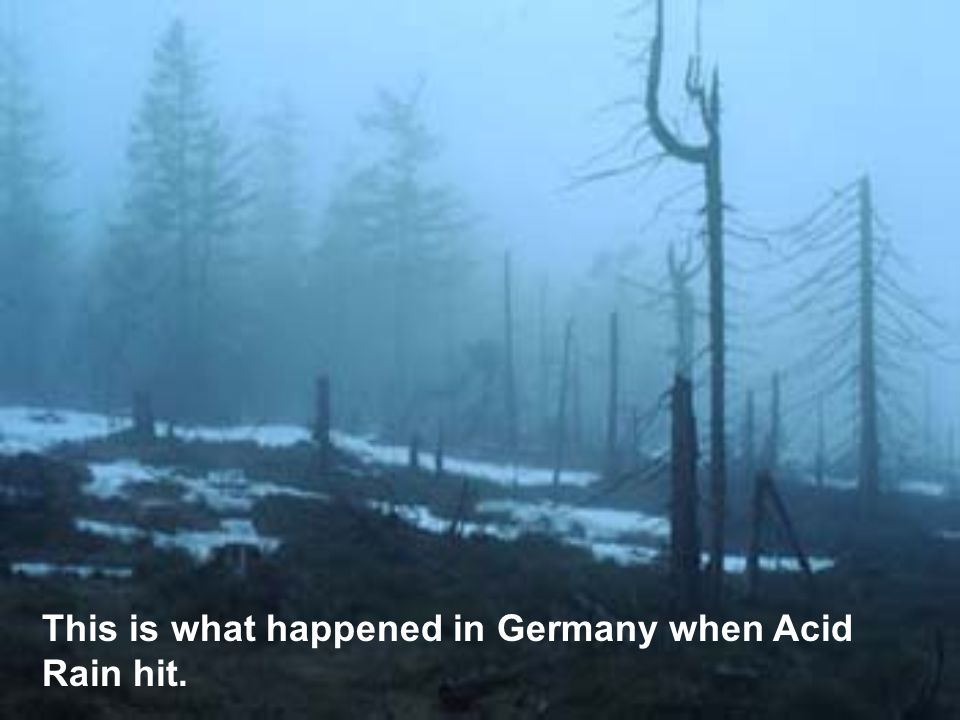 This is what happened in Germany when Acid Rain hit.
