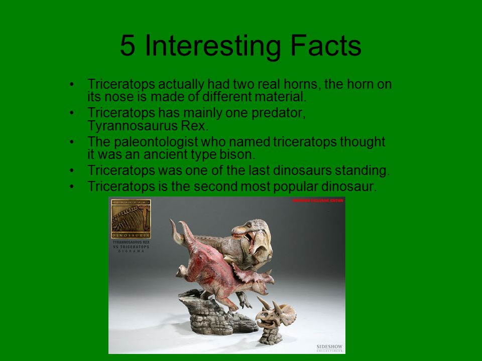 5 Interesting Facts Triceratops actually had two real horns, the horn on its nose is made of different material.