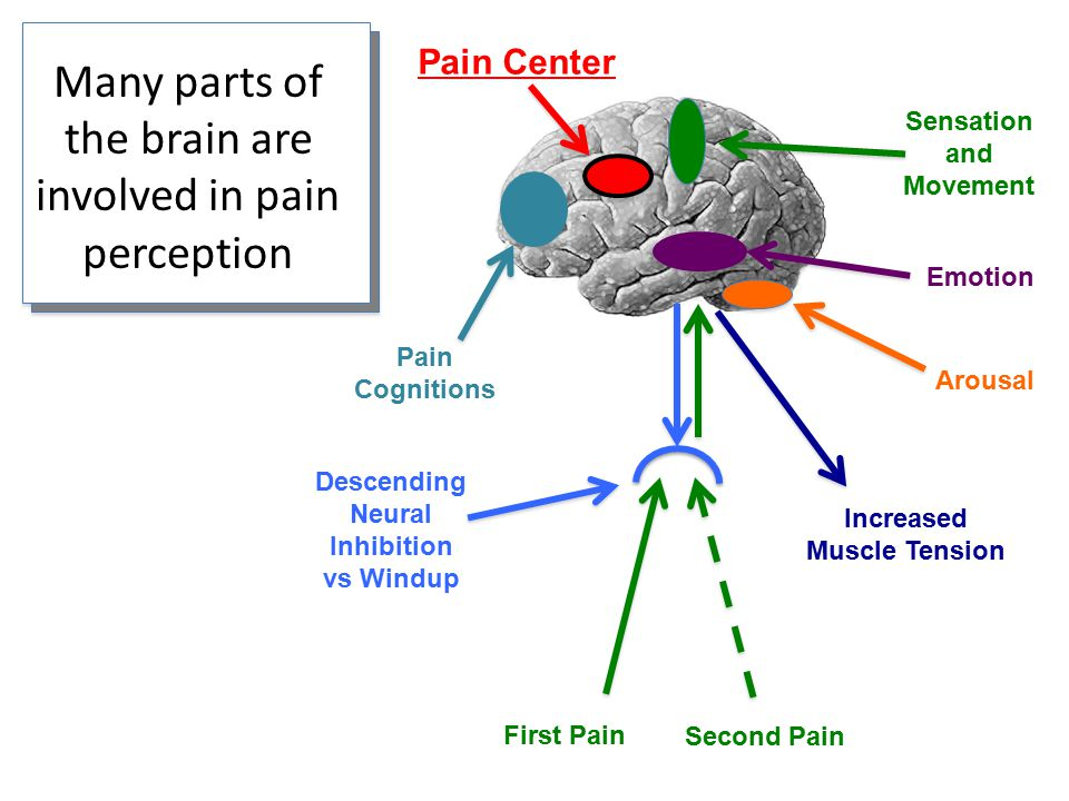 Many parts of the brain are involved in pain perception First Pain Second Pain Descending Neural Inhibition vs Windup Emotion Sensation and Movement Arousal Pain Center Pain Cognitions Increased Muscle Tension