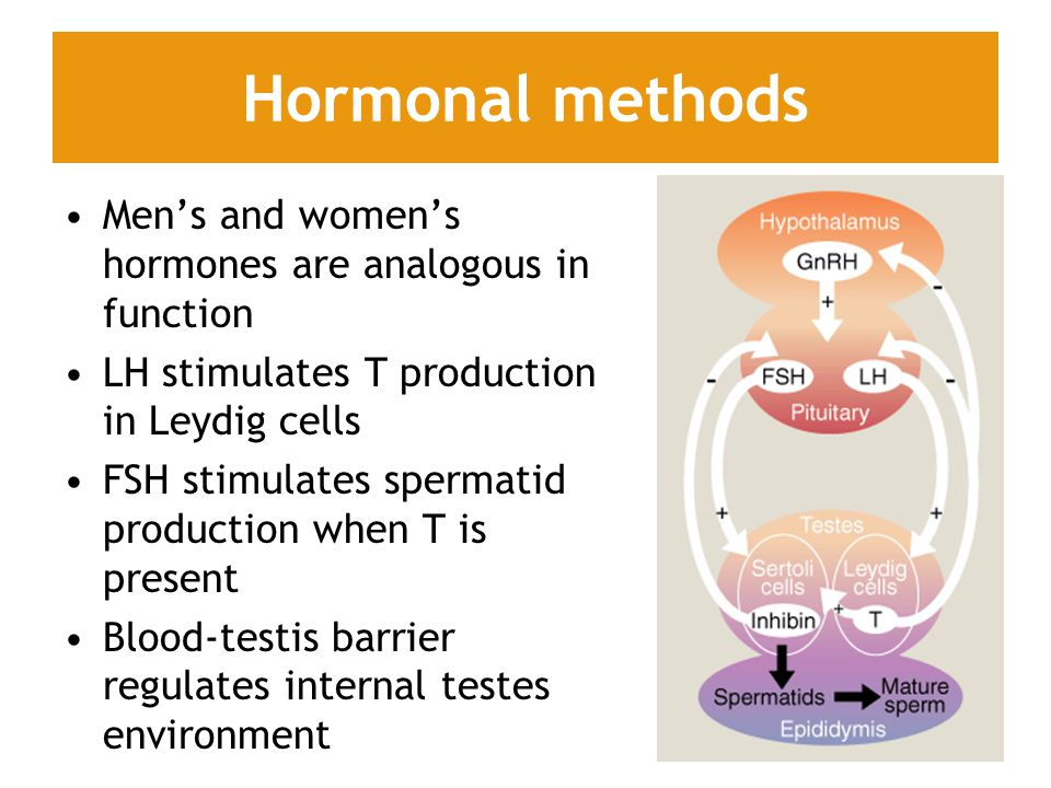 Hormonal methods Men's and women's hormones are analogous in function LH stimulates T production in Leydig cells FSH stimulates spermatid production when T is present Blood-testis barrier regulates internal testes environment