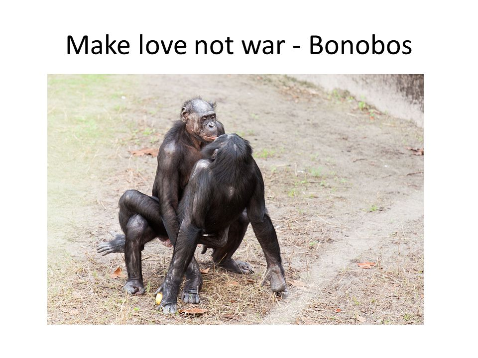 Make love not war - Bonobos