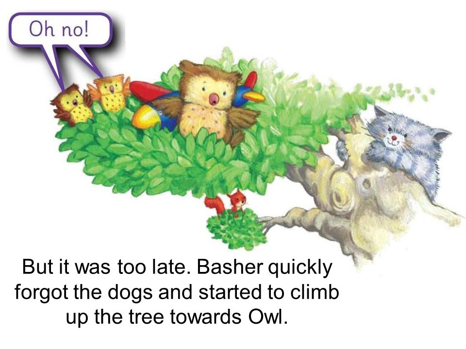 But it was too late. Basher quickly forgot the dogs and started to climb up the tree towards Owl.