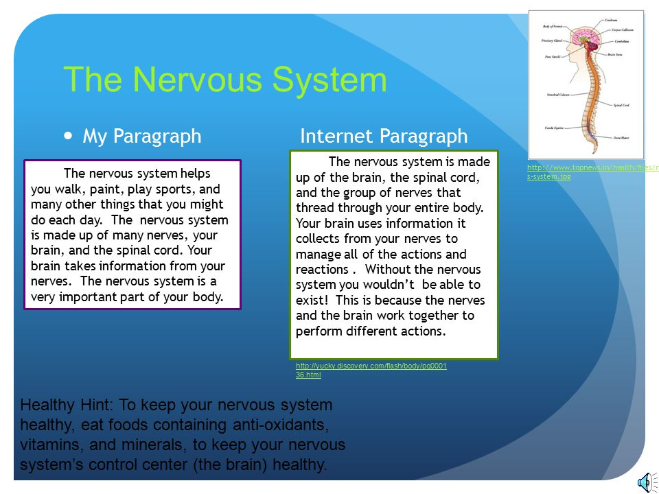 The Nervous System http://www.topnews.in/health/f iles/nervous-system.jpg