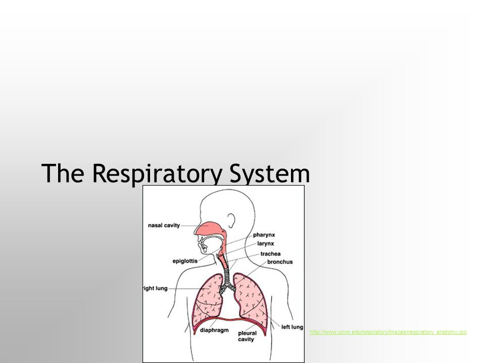 The Circulatory System My Paragraph Internet Paragraph The trillions of cells that make up your body's tissues need supplies of food and oxygen, const