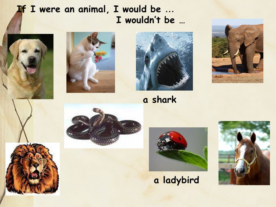 If I were an animal, I would be … a shark a ladybird I wouldn't be …