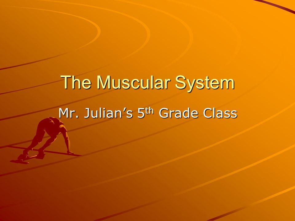 The Muscular System Mr. Julian's 5 th Grade Class