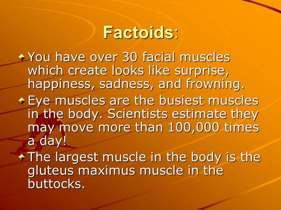 Factoids: You have over 30 facial muscles which create looks like surprise, happiness, sadness, and frowning.