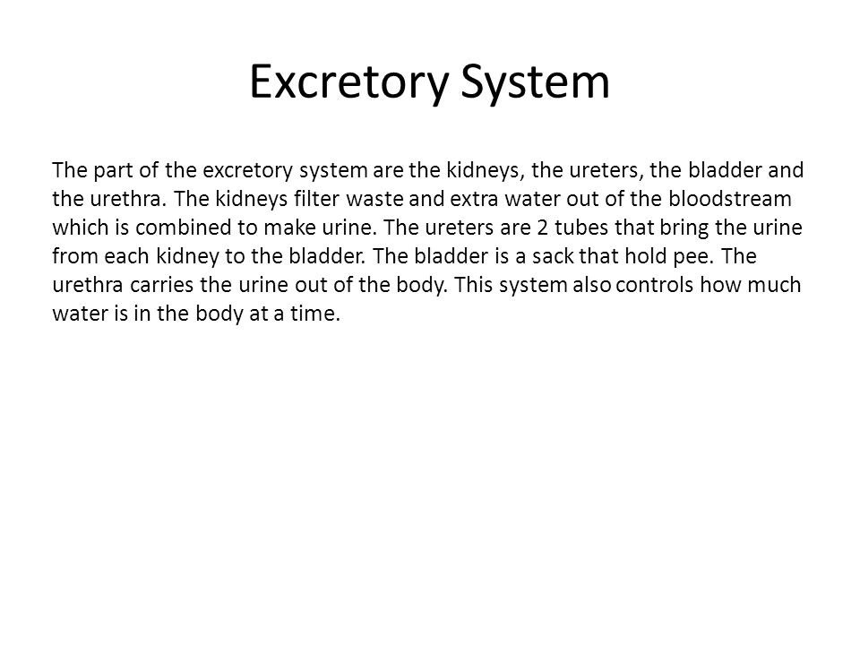 Respiratory System The parts of the respiratory system are the trachea, the lungs, and the diaphragm.
