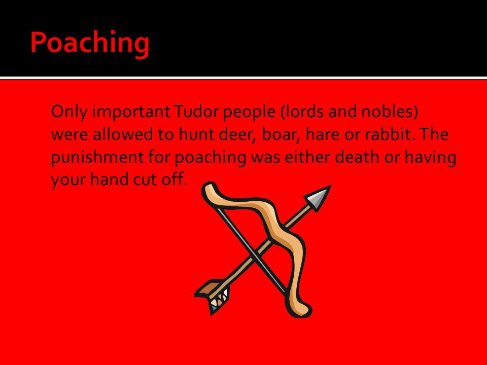  Only important Tudor people (lords and nobles) were allowed to hunt deer, boar, hare or rabbit. The punishment for poaching was either death or havi