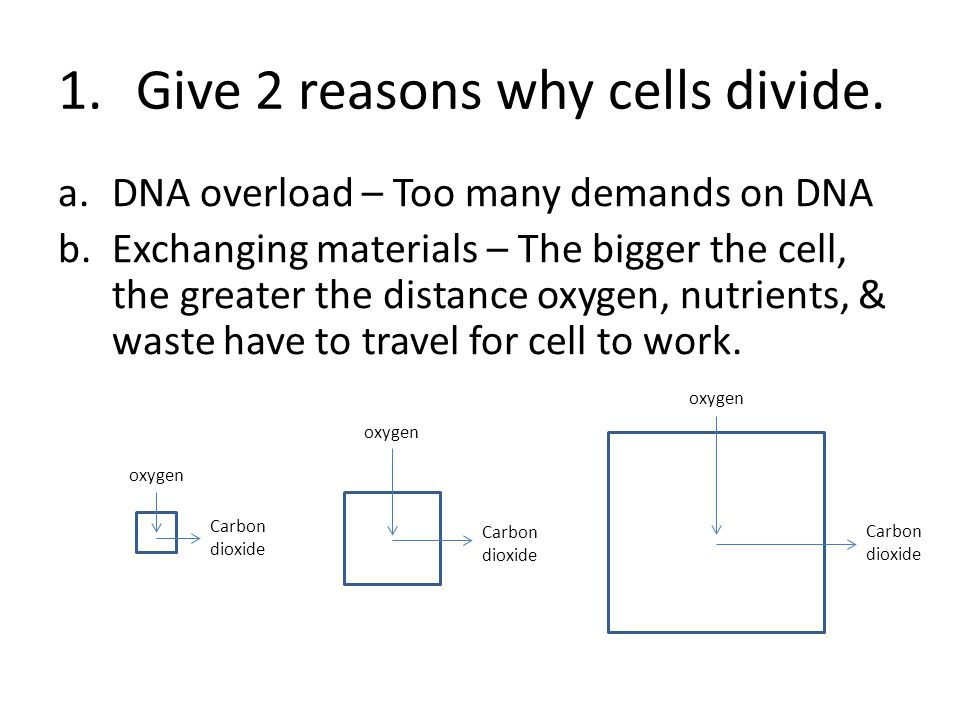 1.Give 2 reasons why cells divide.