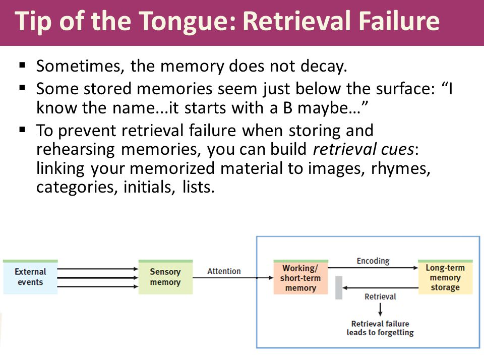 Tip of the Tongue: Retrieval Failure  Sometimes, the memory does not decay.