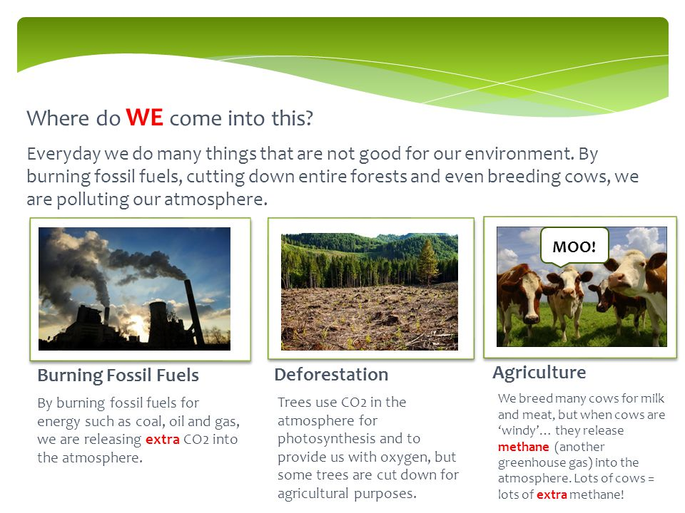 Where do WE come into this. Burning Fossil Fuels Deforestation Agriculture MOO.
