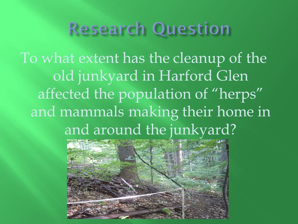To what extent has the cleanup of the old junkyard in Harford Glen affected the population of herps and mammals making their home in and around the junkyard