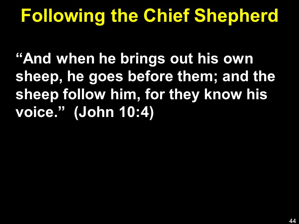 Following the Chief Shepherd And when he brings out his own sheep, he goes before them; and the sheep follow him, for they know his voice. (John 10:4) 44