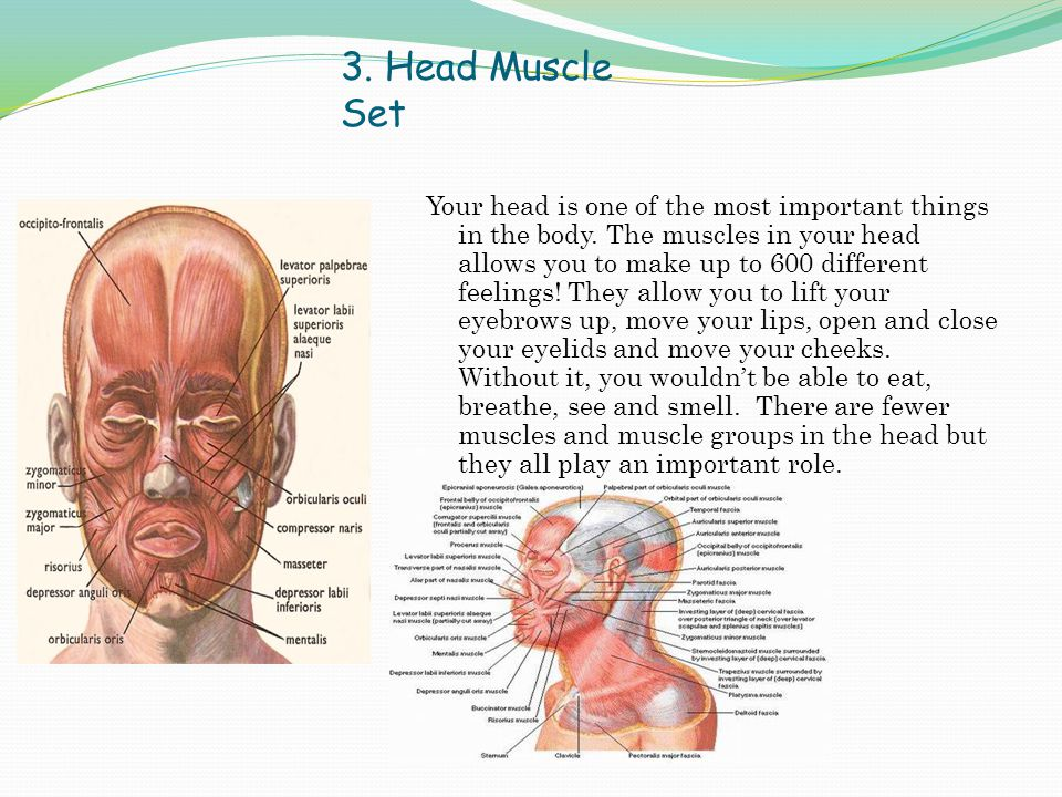 3.Head Muscle Set Your head is one of the most important things in the body.