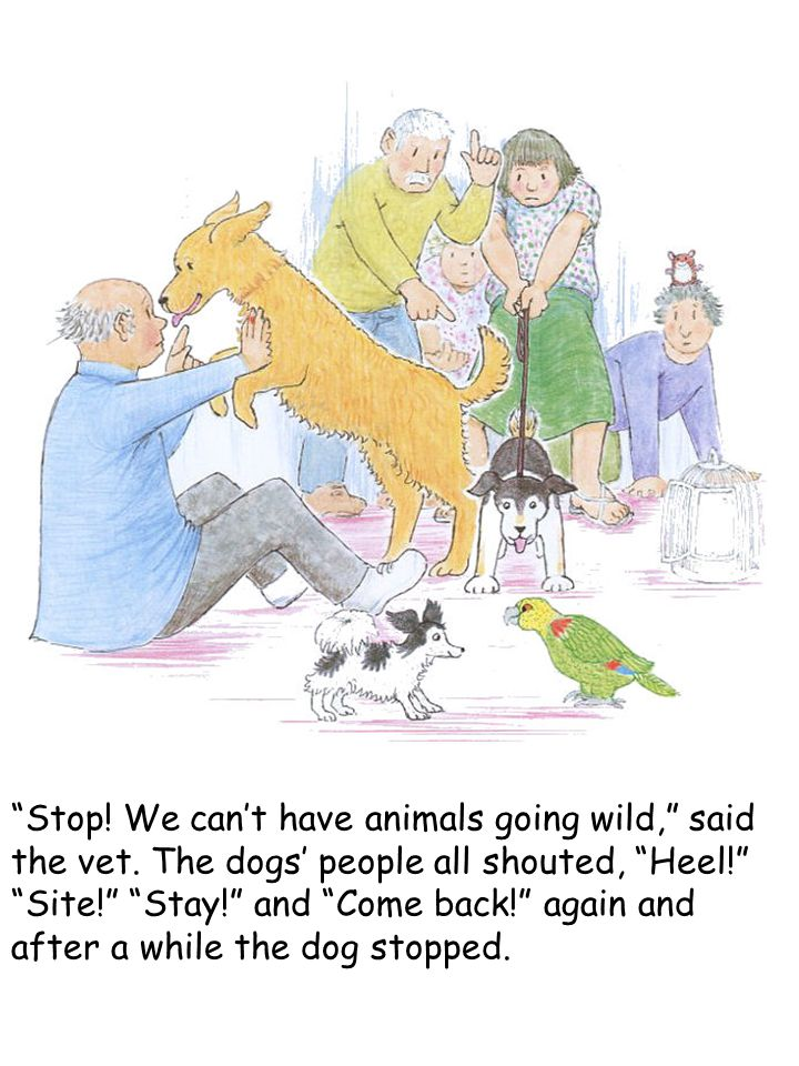 """Stop! We can't have animals going wild,"" said the vet. The dogs' people all shouted, ""Heel!"" ""Site!"" ""Stay!"" and ""Come back!"" again and after a while"