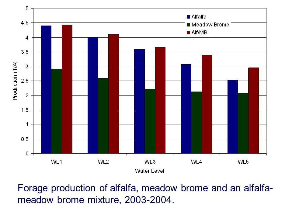 Forage production of alfalfa, meadow brome and an alfalfa- meadow brome mixture, 2003-2004.
