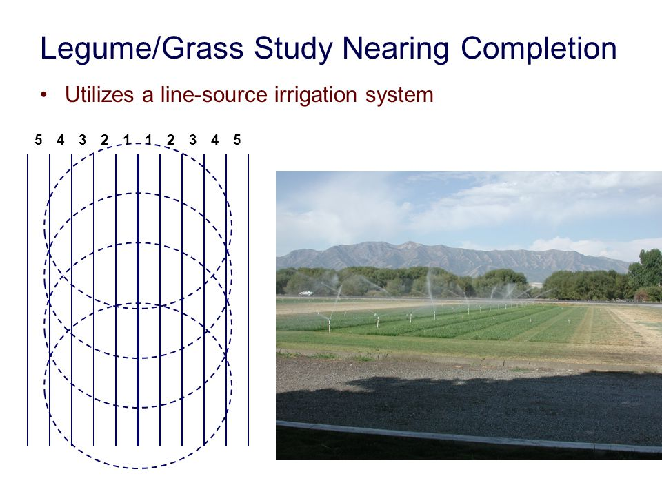 Forage production of alfalfa, tall fescue and an alfalfa-tall fescue mixture, 2003-2004.