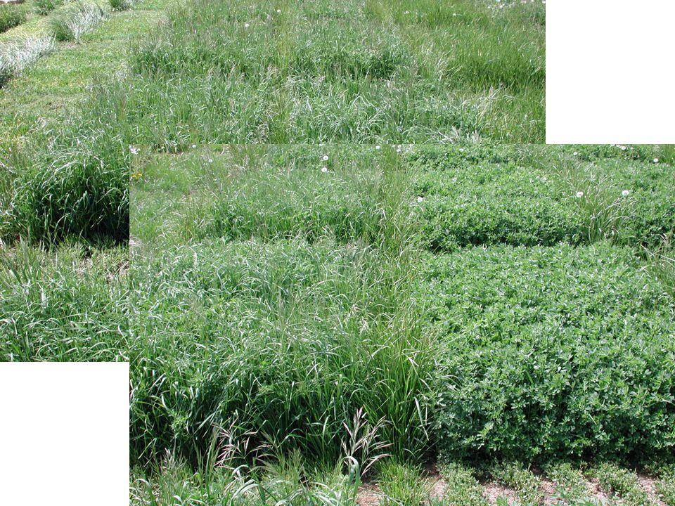 Materials tested Alfalfa –Ladak –Spreader III –Amerigraze –P53V08 –Diploid falcata Empire Birdsfoot Trefoil Grasses –Cache Meadowbrome –Martin Tallfescue –Perennial Ryegrass