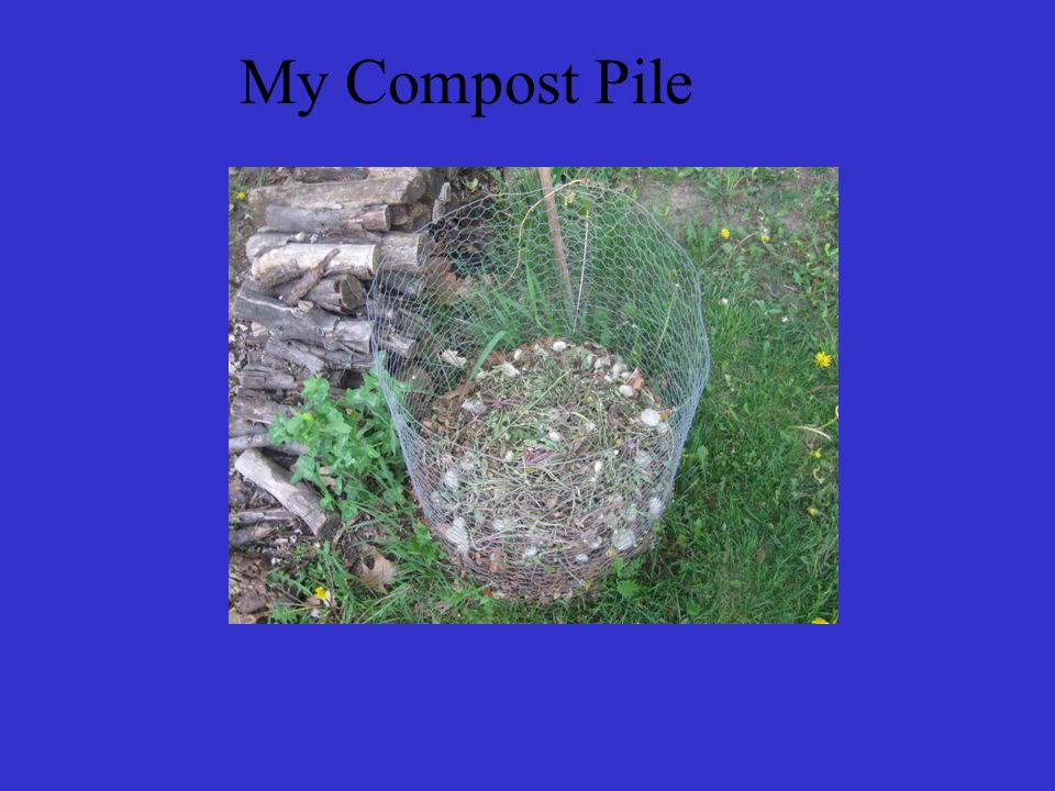 My Compost Pile