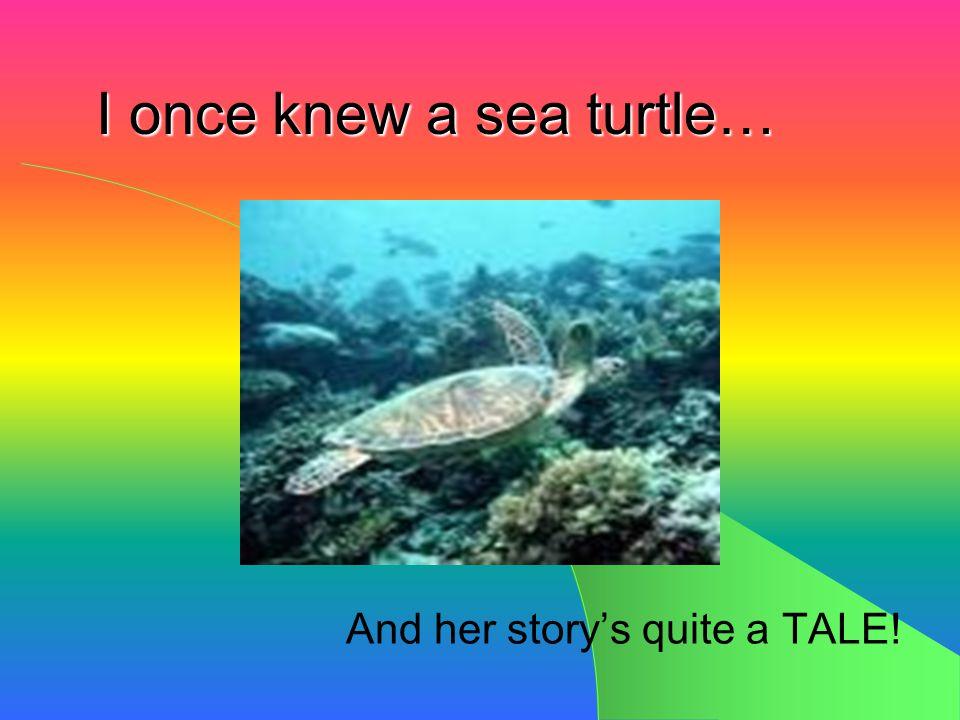 A Turtle Tale… A Turtle Tale…
