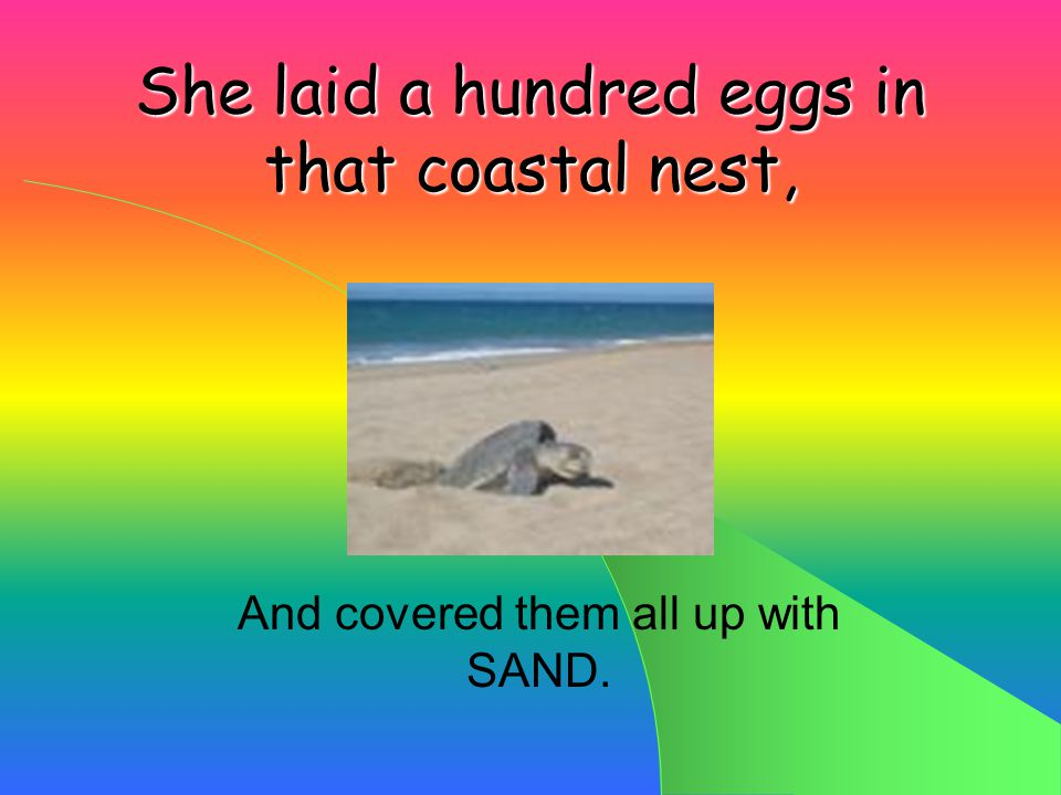 She scooped out a nest in the soft, sandy beach, Knowing exactly what was in STORE!