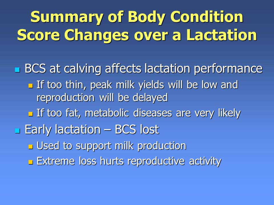 Summary of Body Condition Score Changes over a Lactation BCS at calving affects lactation performance BCS at calving affects lactation performance If too thin, peak milk yields will be low and reproduction will be delayed If too thin, peak milk yields will be low and reproduction will be delayed If too fat, metabolic diseases are very likely If too fat, metabolic diseases are very likely Early lactation – BCS lost Early lactation – BCS lost Used to support milk production Used to support milk production Extreme loss hurts reproductive activity Extreme loss hurts reproductive activity
