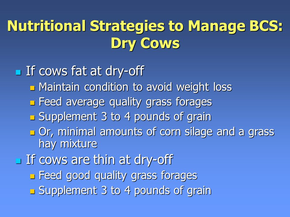 Nutritional Strategies to Manage BCS: Dry Cows If cows fat at dry-off If cows fat at dry-off Maintain condition to avoid weight loss Maintain condition to avoid weight loss Feed average quality grass forages Feed average quality grass forages Supplement 3 to 4 pounds of grain Supplement 3 to 4 pounds of grain Or, minimal amounts of corn silage and a grass hay mixture Or, minimal amounts of corn silage and a grass hay mixture If cows are thin at dry-off If cows are thin at dry-off Feed good quality grass forages Feed good quality grass forages Supplement 3 to 4 pounds of grain Supplement 3 to 4 pounds of grain